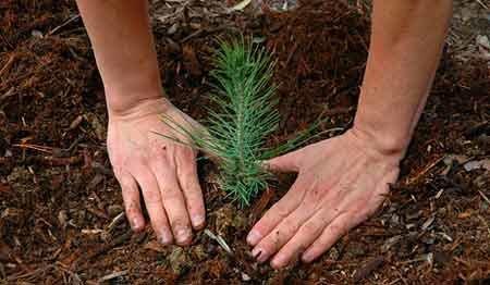 درختکاری، راه حلی ساده برای مقابله با خشکسالی در کشور